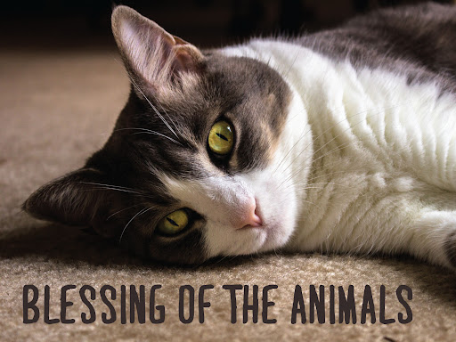 Bring Your Pets: Mt. Tam United Methodist Church Hosts Community-Wide Blessing of the Animals – Oct. 3